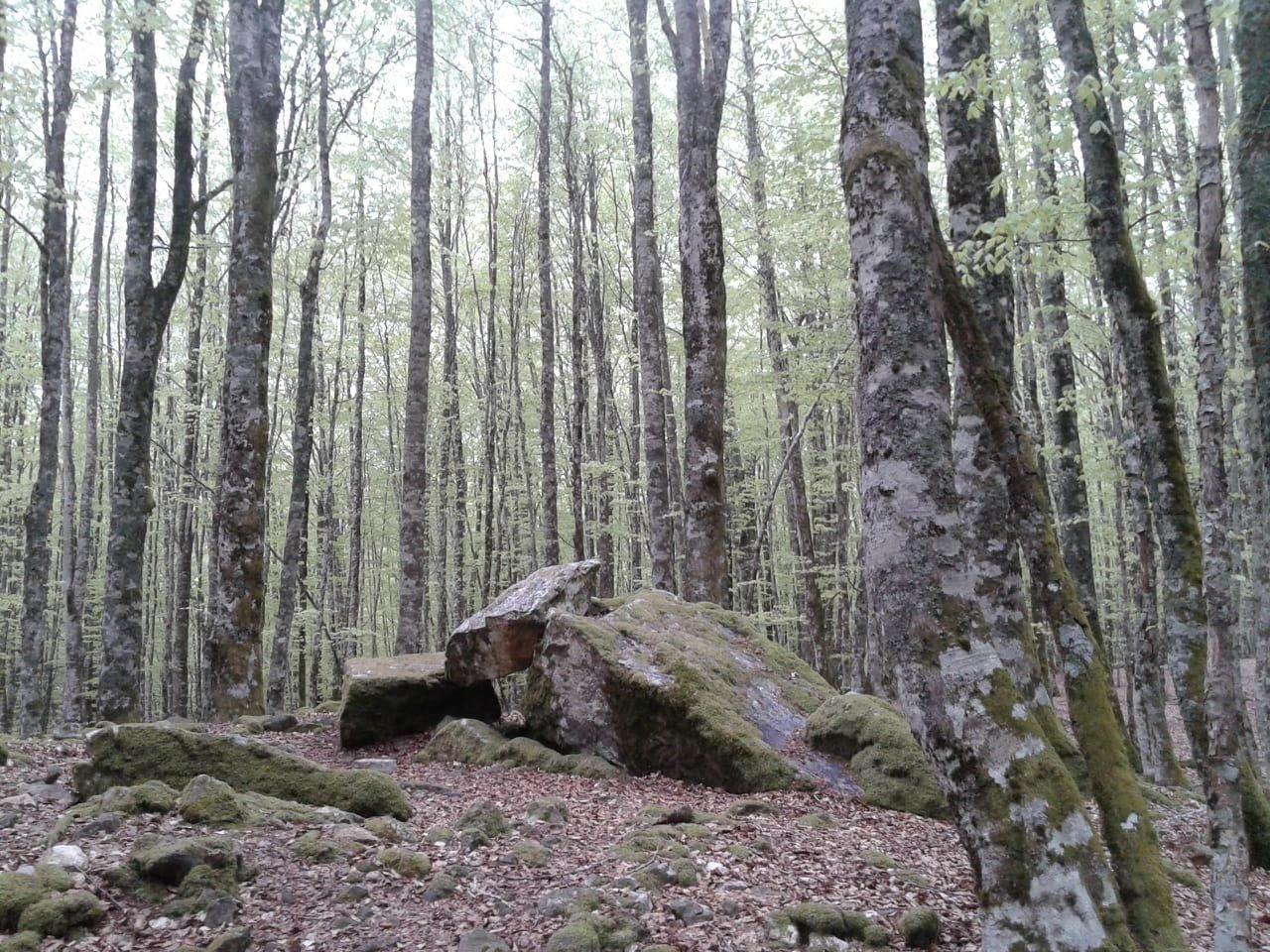 Diario de un peregrino: Burguete-Roncesvalles, 2 de mayo