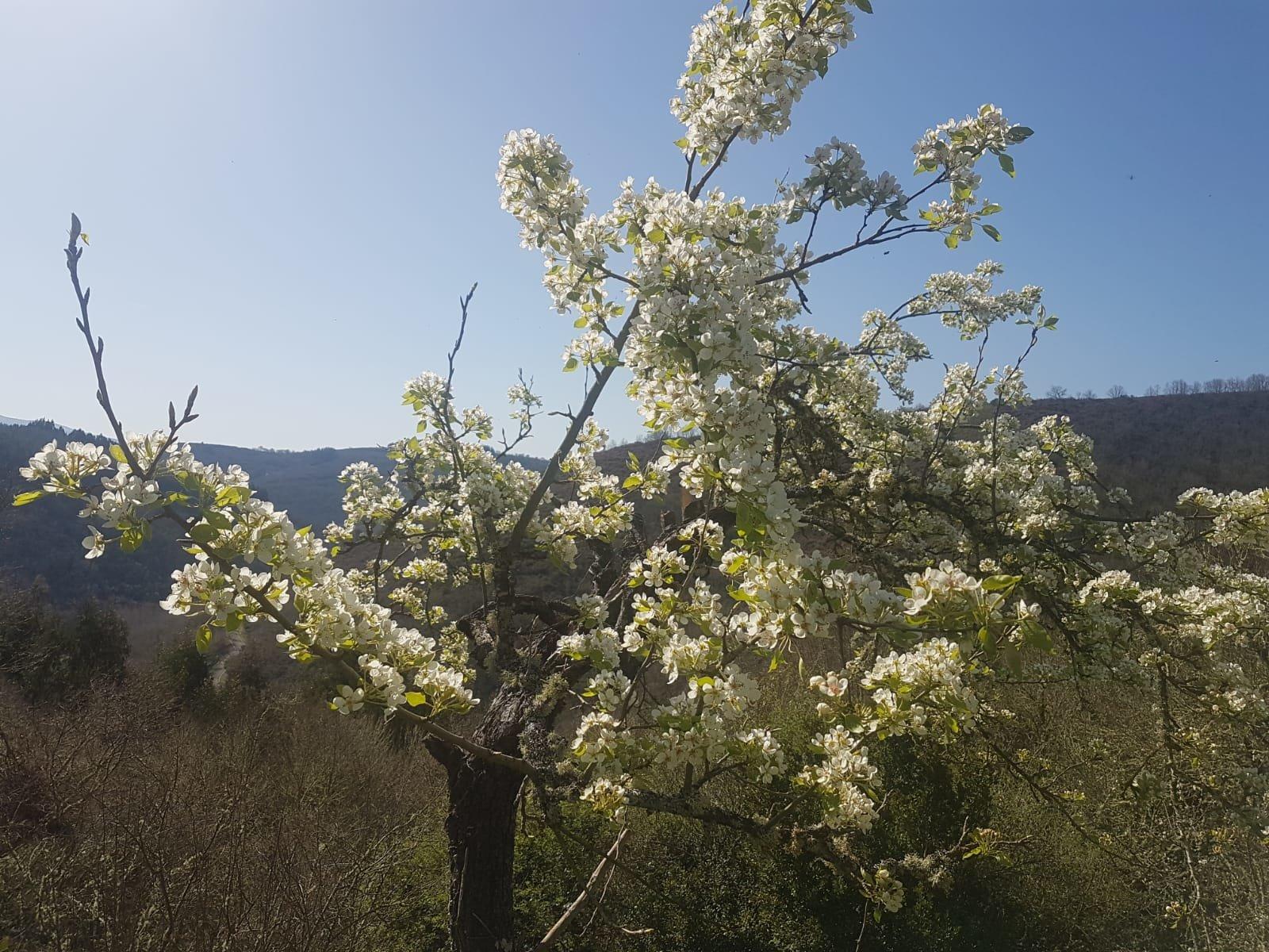 La primavera llegó y se quedó con nosotros, por lo menos de momento